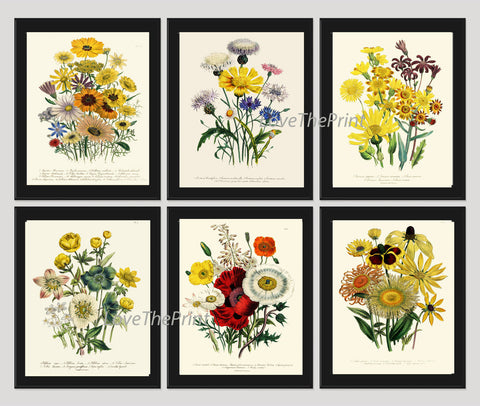BOTANICAL Print SET of 6 Art Print  Loudon Antique Poppy Daisy Wildlower Flowers Yellow Summer Plant Nature to Frame Home Decor Garden
