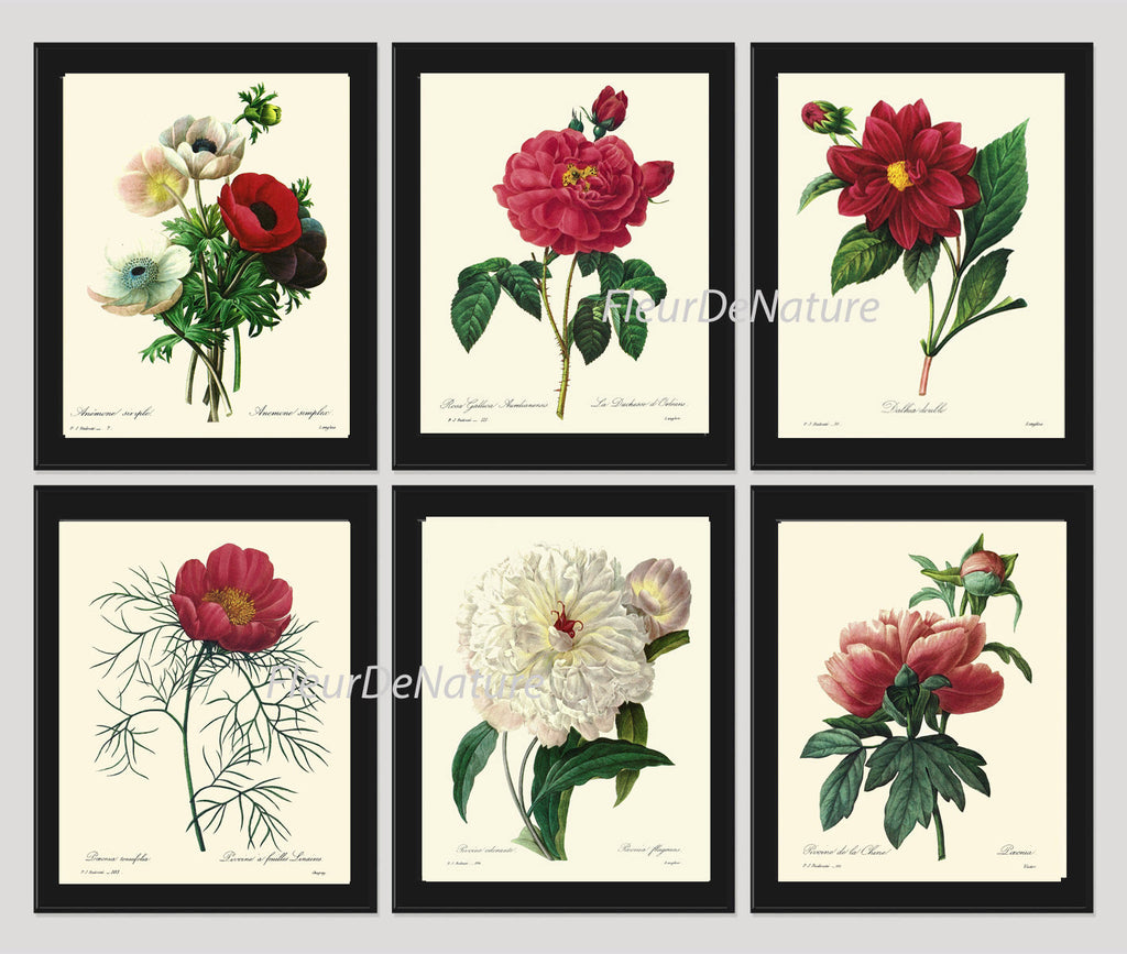 BOTANICAL Print SET of 6 Art Print  Redoute Antique French Garden Large Red White Peony Rose Chart Summer Plant Nature Wall Home Decor
