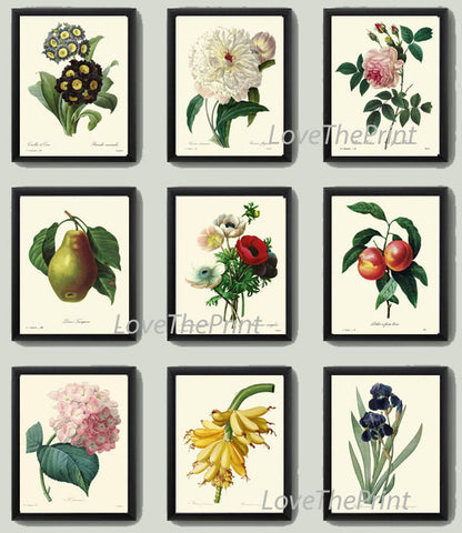 BOTANICAL Flower Print SET of 9 Art  Redoute Antique French Garden Fruit Flowers Chart Plants Spring Summer Vintage Home Decor to Frame
