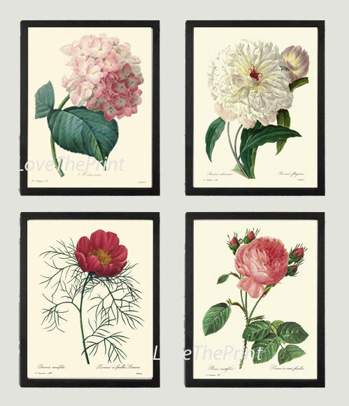 BOTANICAL Print SET of 4 Art Print  Beautiful Antique Hydrangea Peony Rose White Pink Spring Summer to Frame Illustration Home Decor