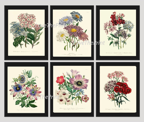 BOTANICAL Print SET of 6 Art Print  Loudon Antique Hydrangea Aster Passion Flower Chart Summer Plant Nature to Frame Home Decor Garden