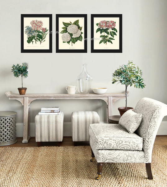 BOTANICAL Print SET of 3 Art Print  Beautiful Antique White Pink Hydrangea Flowers Spring Summer Plant Nature to Frame Home Decor Garden