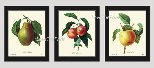 BOTANICAL Print SET of 3 Art Print  Beautiful Antique Fruit Pear Apple Peach Spring Summer to Frame Kitchen Dining Room Home Decor