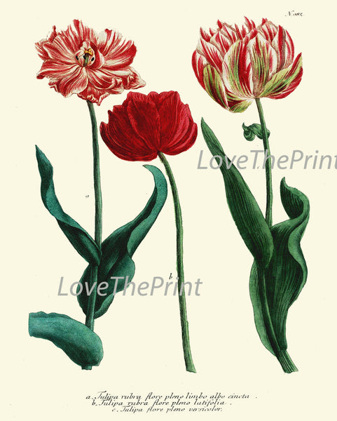 BOTANICAL Print SET of 9 Art Print  Antique French Garden Blue Iris Red Yellow Tulips Plants Spring Summer Vintage Room Wall Home Decor