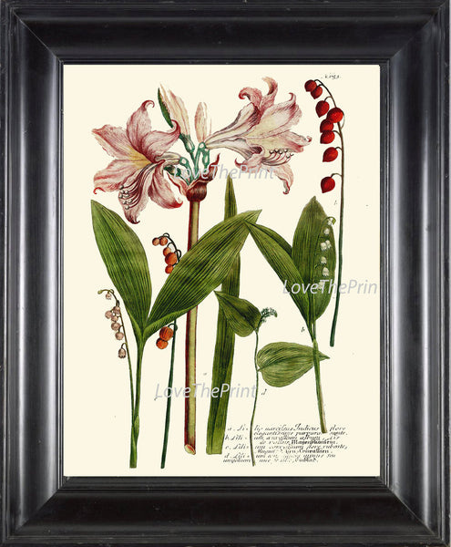 BOTANICAL PRINT  Art W34 Beautiful Pink Amaryllis Flowers Red Berries Berry Seeds Plant Chart Vintage Home Room Wall Decor Decoration