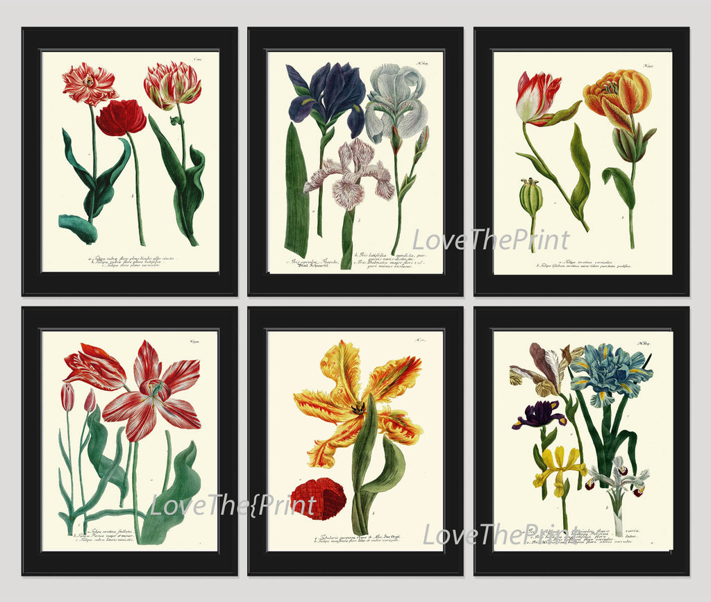 BOTANICAL Print SET of 6 Art Print  Antique French Garden Blue Iris Red Yellow Tulips Plants Spring Summer Vintage Room Wall Home Decor