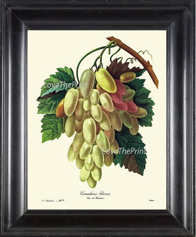 BOTANICAL Fruit PRINT Redoute  Art Print 68 Beautiful Grapes Grape Vine White Italian Plant French Garden Nature to Frame Home Decor