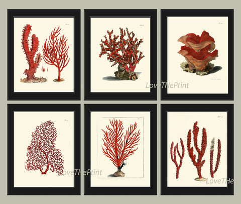 Coral Print SET of 6 Art  Beautiful Antique Red Corals Illustration Sea Ocean Nature Coastal VIntage Wall Decor Interior Design to Frame