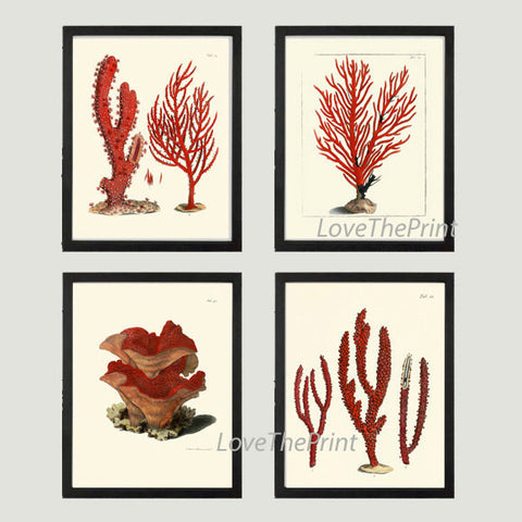 Coral Print SET of 4 Art Beautiful Antique Red Corals Illustration Sea Ocean Coastal Marine Decor Bathroom Bedroom Decoration to Frame