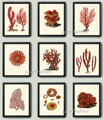 Coral Print SET of 9 Art  Beautiful Antique Red Corals Illustration Sea Ocean Nature Coastal VIntage Wall Decor Interior Design to Frame