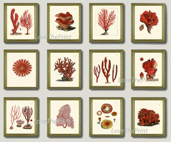 Coral Print SET of 12 Art  Beautiful Antique Red Coral Illustration Sea Ocean Nature Coastal VIntage Wall Decor Interior Design to Frame