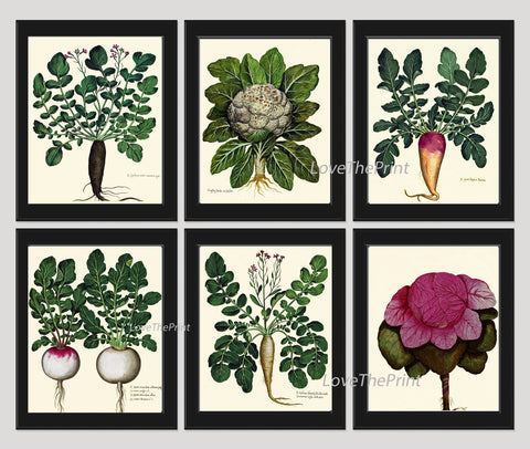 BOTANICAL Print SET of 6 Art Print  Aldrovandi Antique French Garden Vegetable Plants Spring Summer Vintage Room Wall Home Room Decor