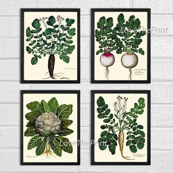 BOTANICAL Print SET of 4 Art Print  Aldrovandi Antique French Garden Vegetable Plants Spring Summer Vintage Room Wall Home Room Decor