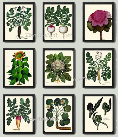 BOTANICAL Print SET of 9 Art Print  Aldrovandi Antique Garden Fruit Vegetable Plants Spring Summer Kitchen Dining Home Room to Frame