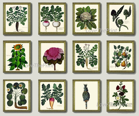 BOTANICAL Print SET of 12 Art Print  Aldrovandi Antique Garden Fruit Vegetable Plants Spring Summer Kitchen Dining Home Room to Frame