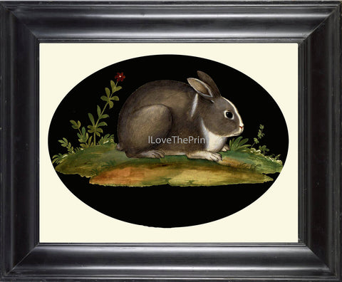 Rabbit Print  Art Print 23 Beautiful Antique Bunny Flowers on Black Background Country French Rustic Vintage Nature Farm Home Room Decor