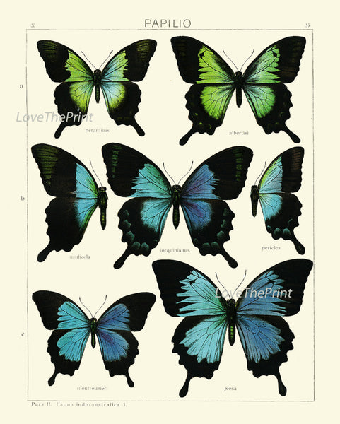 BOTANICAL Print SET of 6 Butterfly Art Prints  Beautiful Antique Blue Butterlies Wall Home Decor Decoration Interior Desing to Frame