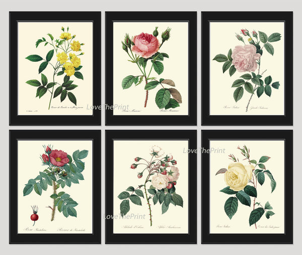 BOTANICAL Print SET of 6 Art Prints  French Redoute Antique Roses Pink Red White Yellow Wall Decor Decoration Interior Desing to Frame
