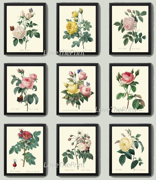BOTANICAL Print SET of 9 Art Prints  Redoute Beautiful Antique Yellow Pink White Roses Flowers Butterflies Vintage Home Room Decoration