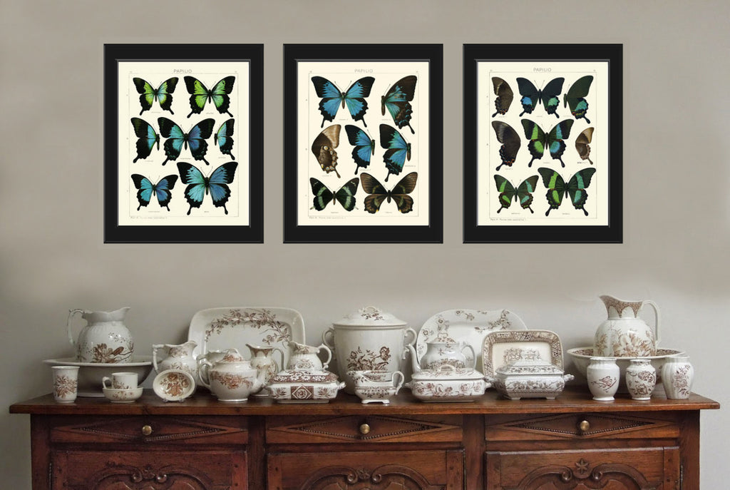 BOTANICAL Print SET of 3 Butterfly Art Prints Beautiful Antique Blue ...