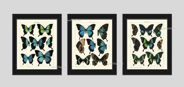 BOTANICAL Print SET of 3 Butterfly Art Prints  Beautiful Antique Blue Butterlies Garden Nature Interior Design Room Wall Decor to Frame