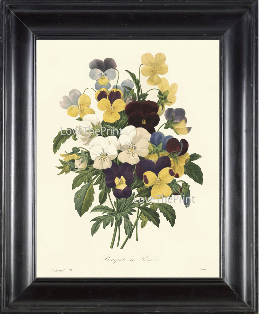 BOTANICAL PRINT Redoute  Art Print 356 Beautiful Pansies Antique Flowers Wall Home Decoration Spring Summer Garden Nature Plant to Frame