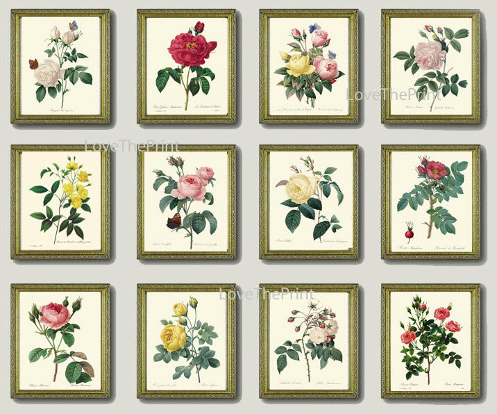 BOTANICAL Print SET of 12 Art Prints  Redoute Beautiful French Garden Antique Yellow Pink White Roses Flowers Vintage Home Room Decor