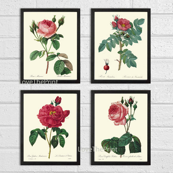 BOTANICAL Print SET of 4 Art Print  Beautiful Antique French Pink Red Roses White Spring Summer Garden to Frame Illustration Home Decor