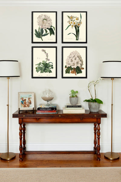 BOTANICAL Print SET of 4 Art Print  Beautiful Antique French White Flower Peony Narcissus Rhododendron Spring Summer Garden to Frame