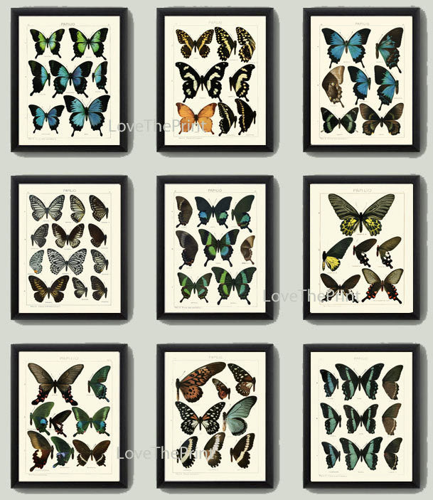 BOTANICAL Print SET of 9 Butterfly Art Prints  Beautiful Antique Blue Butterlies Wall Home Decor Decoration Illustration to Frame