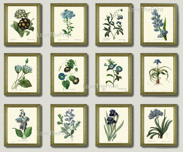 BOTANICAL Print SET of 12 Art Print  Redoute Antique French Garden Blue Iris Butterfly Plants Spring Summer Vintage Room Wall Home Decor