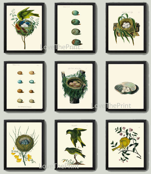 Bird Egg Print SET of 9 Art Print Antique Birds Eggs on Ivory Background Natural Science Green Forest Nature Wall Home Decor Interior Design