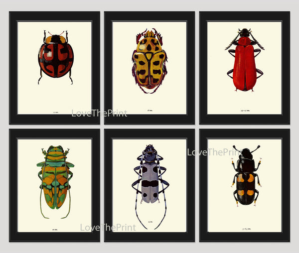 Beetle Print SET of 6 Art Print  Antique Beetles Ladybug Illustration Garden Insect Forest Nature Home Decor Interior Design to Frame