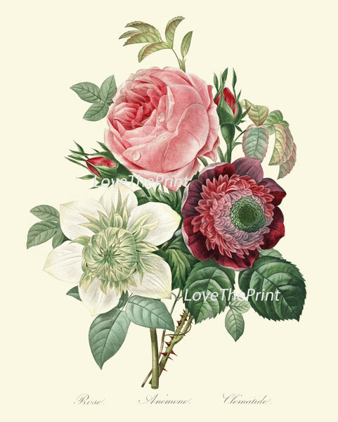 BOTANICAL PRINT Redoute Flower  Art Print 427 Beautiful Antique Rose Pink White Anemone French Country Bouquet Illustration to Frame