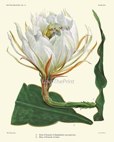 BOTANICAL PRINT CACTUS  Art Print 19 Beautiful Large White Plant Flower Tropical Illustration Garden Nature Home Wall Decor to Frame