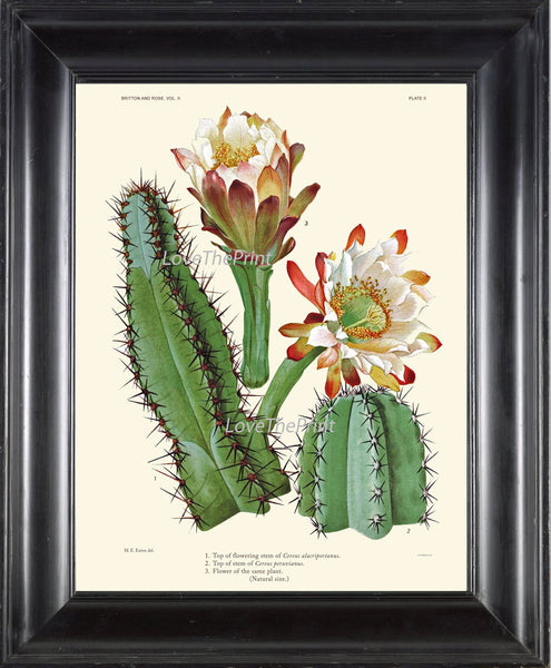 BOTANICAL PRINT CACTUS  Art Print 11 Beautiful Blooming Plant Flower Tropical Illustration Garden Nature Home Wall Decor to Frame