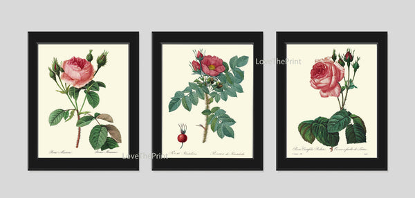 BOTANICAL Print SET of 3 Art Prints  Redoute Antique French Pink Red Roses Garden Nature Plants Vintage Home Room Wall Decor to Frame