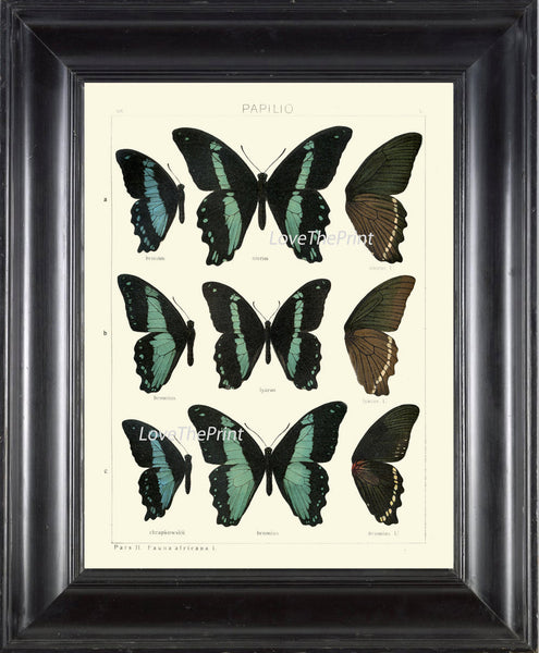 BUTTERFLY PRINT SEITZ  Botanical Art Print 23 Beautiful Blue Spotted Butterflies Natural Science Antique Illustration Home Wall Decor