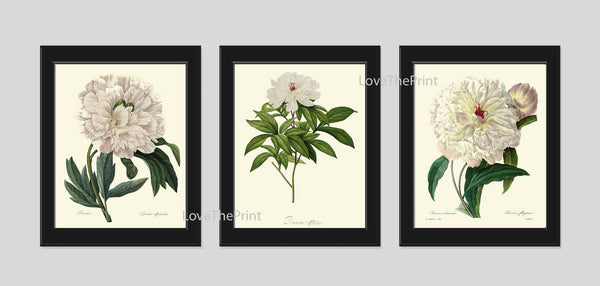 BOTANICAL Print SET of 3 Art Prints  Redoute Antique French White Peony Peonies Spring Summer Garden Nature Plants Vintage Home Decor