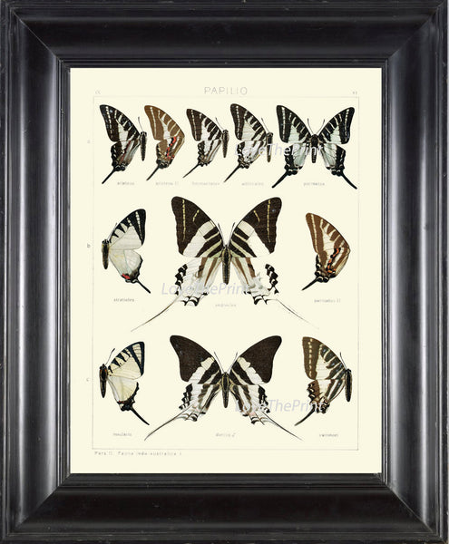 BUTTERFLY PRINT SEITZ  Botanical Art Print 12 Beautiful Butterflies Natural Science Antique Illustration Home Room Wall Decor to Frame