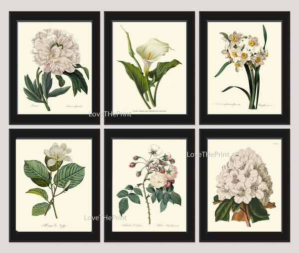 BOTANICAL Print SET of 6 Art Print  Redoute Antique French Garden White Flowers Peony Lily Narcissus Rose Plants Spring Wall Home Decor