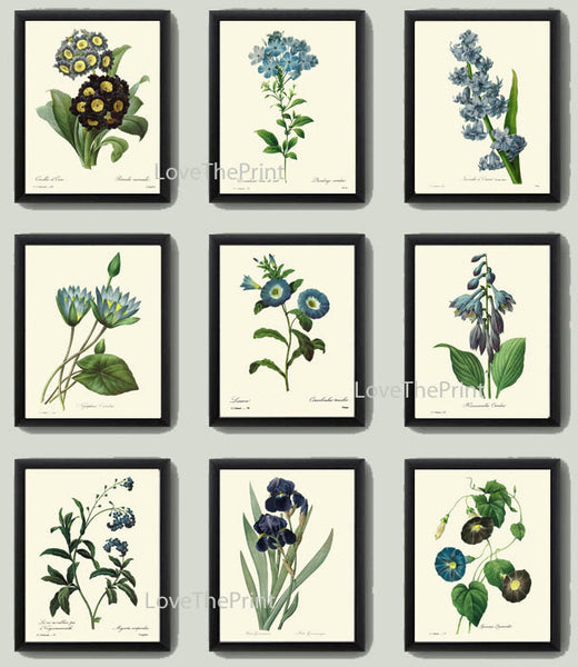 BOTANICAL Print SET of 9 Art Print  Redoute Antique French Garden Blue Iris Butterfly Plants Spring Summer Vintage Room Wall Home Decor