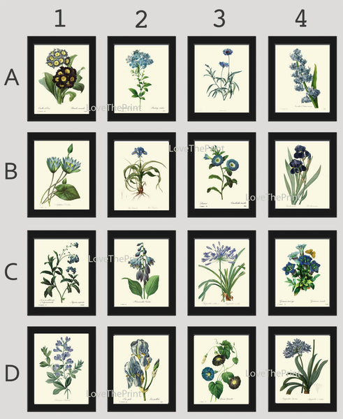 BOTANICAL Print SET of 16 Art Print  Redoute Antique French Garden Blue Flowers Plants Spring Summer Vintage Wall Home Decor to Frame