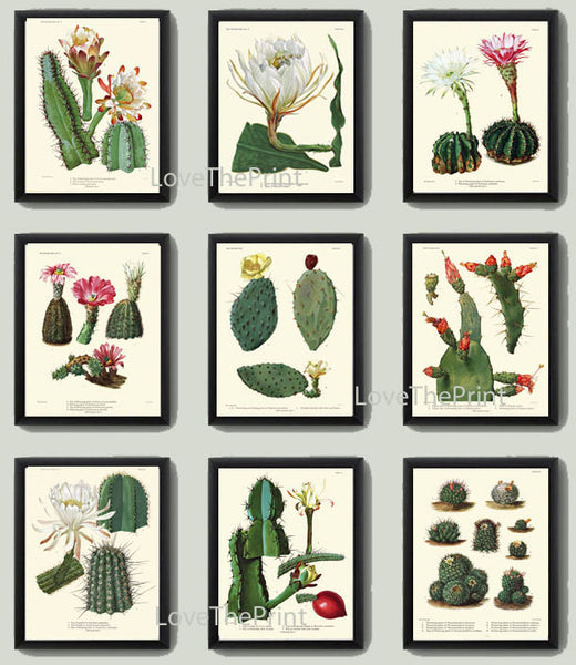 BOTANICAL Print SET of 9 Art Print  Antique Cactus Tropical Blooming Plants Flowers Illustration Room Wall Home Decor Design to Frame