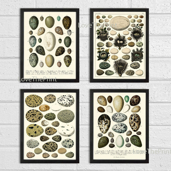 Bird Egg Print SET of 4 Art Print Antique Vintage Birds Eggs on Ivory Background Green Garden Forest Nature Wall Home Decor Interior Design