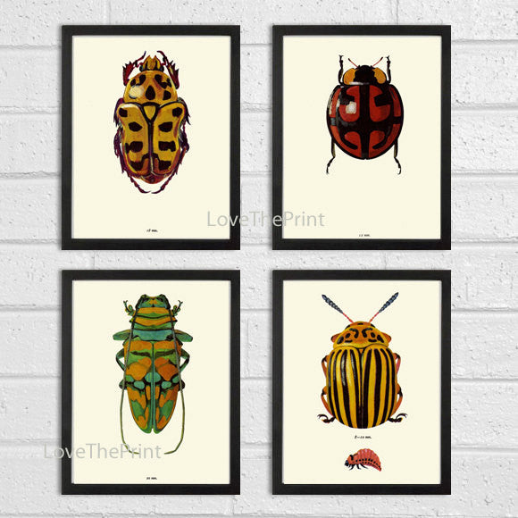 Beetle Print SET of 4 Art Print Antique Beetles Ladybug Insect Illustration Garden Forest Nature Home Wall Decor Interior Design to Frame