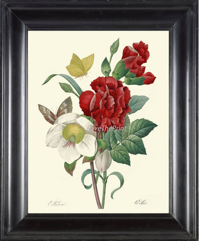 BOTANICAL PRINT Redoute Flower  Art Print 422 Beautiful Antique Flowers Red Carnation Butterfly Graden Illustration to Frame Home Decor