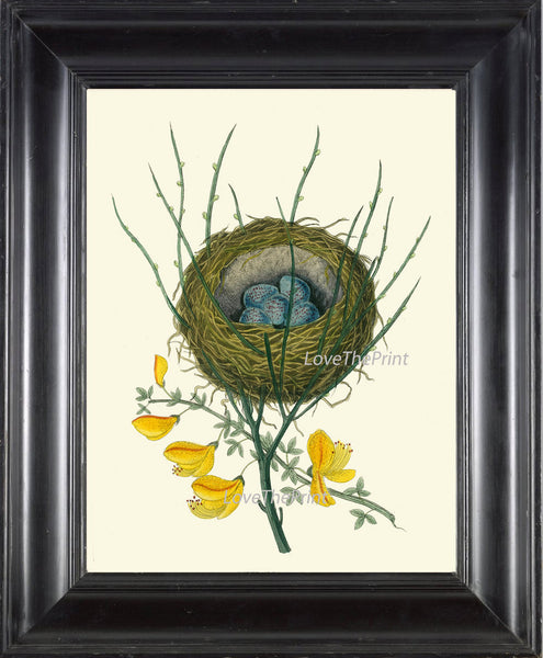 BIRD PRINT  Art B8 Beautiful Antique Red Pole Bird Nest Blue Eggs Yellow Flower Decoration Wall Hanging Home Living Room Interior Design