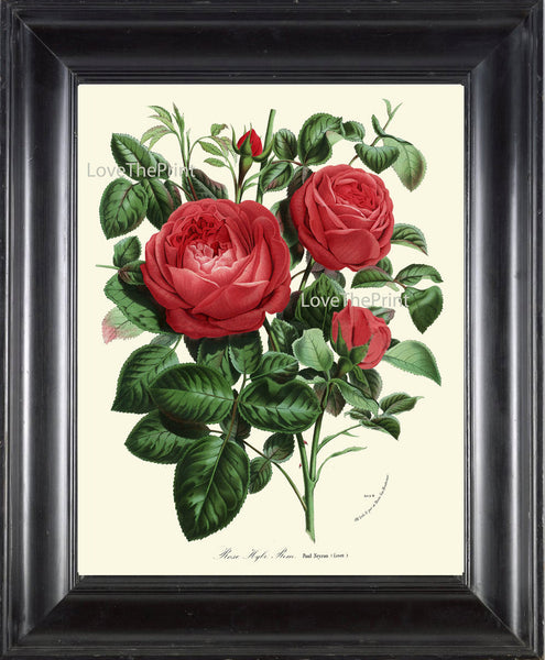BOTANICAL PRINT HOUTTE  Art Print 148 Beautiful Antique Red Rose Rosebuds Roes Flower Spring Summer Nature Garden Home Room Wall Decor