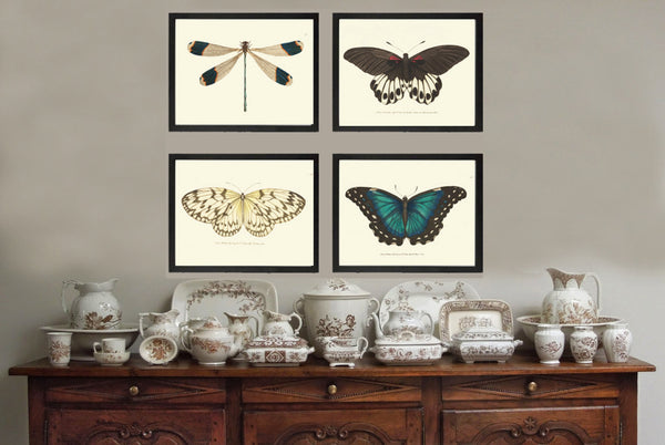 Butterfly Print SET of 4 Art Print  NODD Antique Dragonfly Butterfly Insect Illustration Garden Nature Home Decor Interior Design